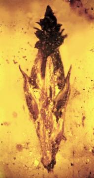Oldest Grass Fossil