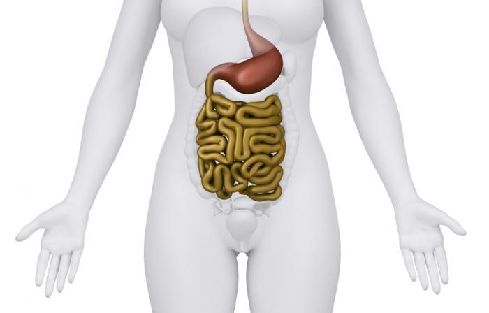 human gut