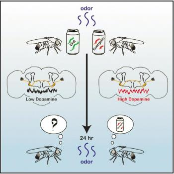 Meal Energy Content Affects Fruit Fly Memory