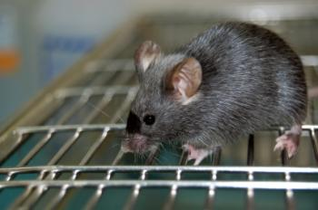 A laboratory mouse on top of a cage.