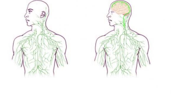 The New Map of the Lymphatic System